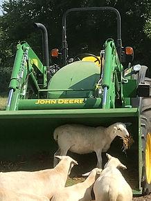 SHEEP10.jpeg