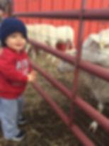SHEEP14.JPG