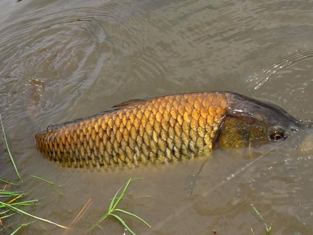 4 Easy Tips For Fly Fishing Dirty Water