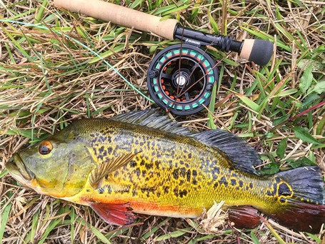 Sage 6260 Fly Reel Review