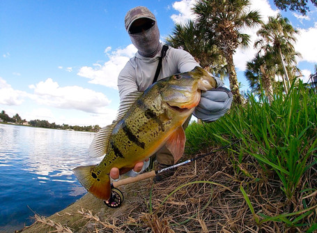 4 Things About Fishing for Florida Peacock Bass You May Not Know