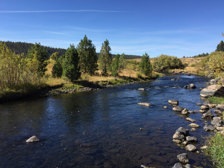5 Tips for Streamer Fishing in Current