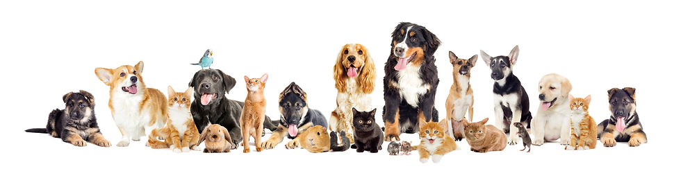 group of pets k9 competition