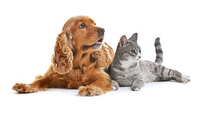 Cute dog and cat together on white backg