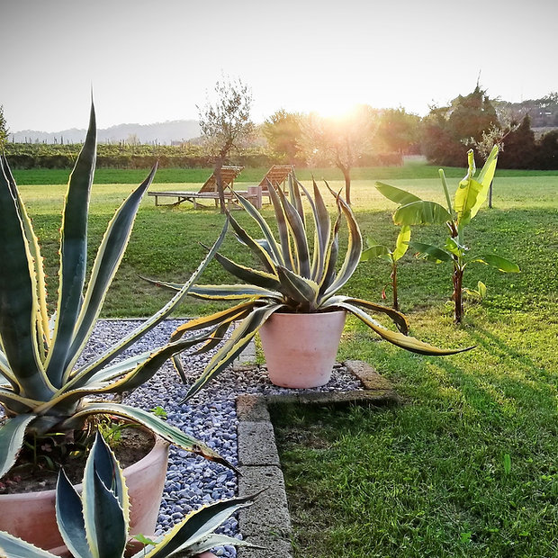 Outdoor garden with natural furniture and plants, cactus, surrounded by vineyard and olive trees during the sunset.