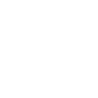 Plant#5_white_mirror.png