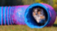 dog-agility-tunnel-1.jpg