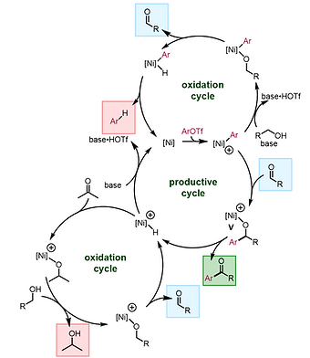 catalytic cycle.PNG