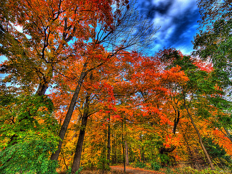Goodbye Summer, Hello Fall!