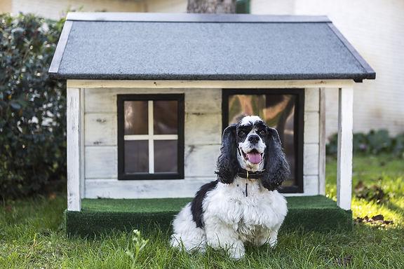 kennels-for-pets-3821849_1920.jpg