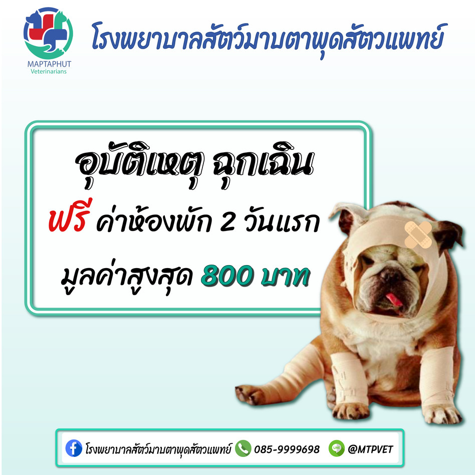 อุบัติเหตุฉุกเฉิน โรงพยาบาลสัตว์มาบตาพุดสัตวแพทย์ เปิด 24 ชม.
