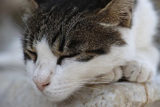 cat-2592540_1920.jpg