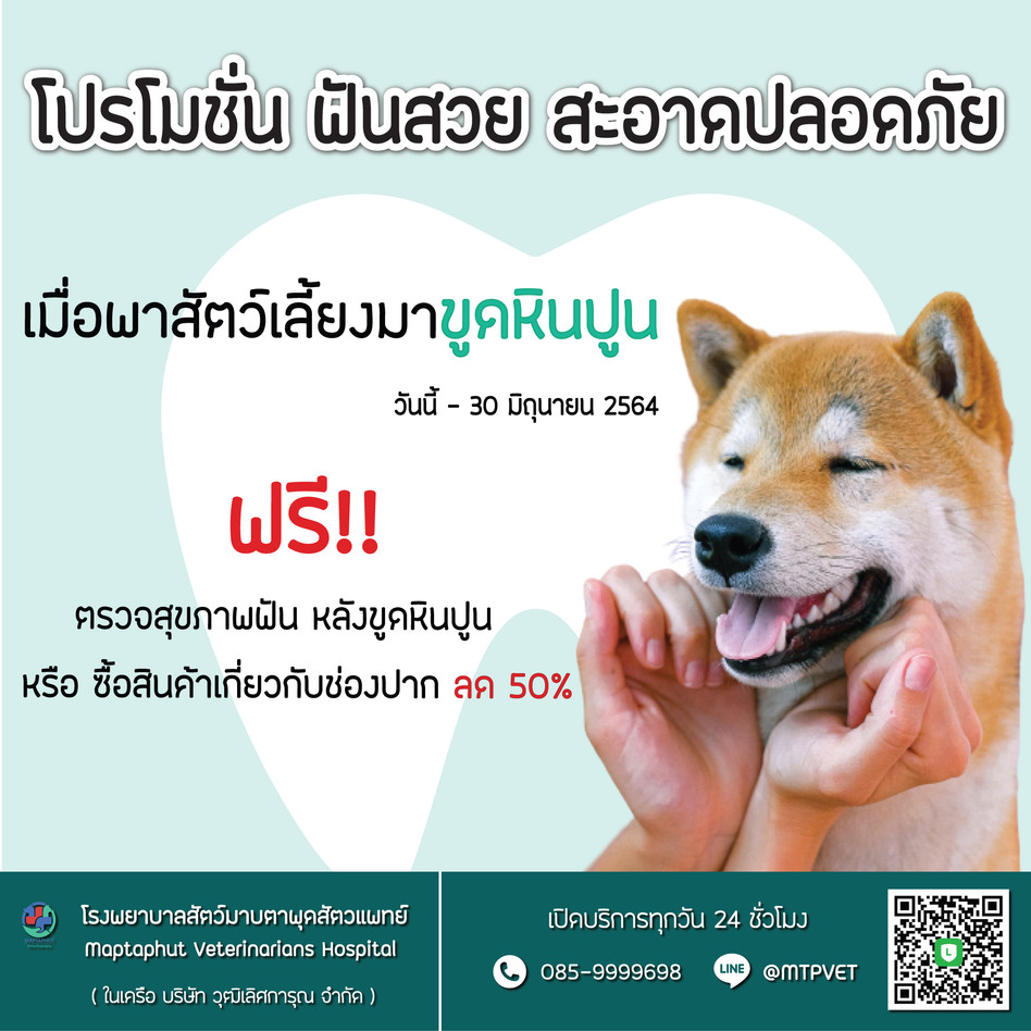 โปรขูดหินปูน โรงพยาบาลสัตว์มาบตาพุดสัตวแพทย์ เปิด 24 ชม.