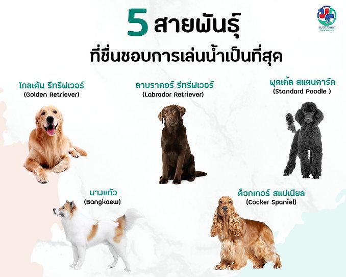 5สายพันธุ์สุนัข-ที่ชื่นชอบการเล่นน้ำ.jpg