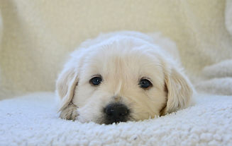 puppy-3842997_1920.jpg