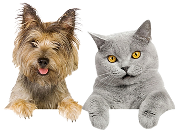kisspng-pet-sitting-dogcat-relationship-