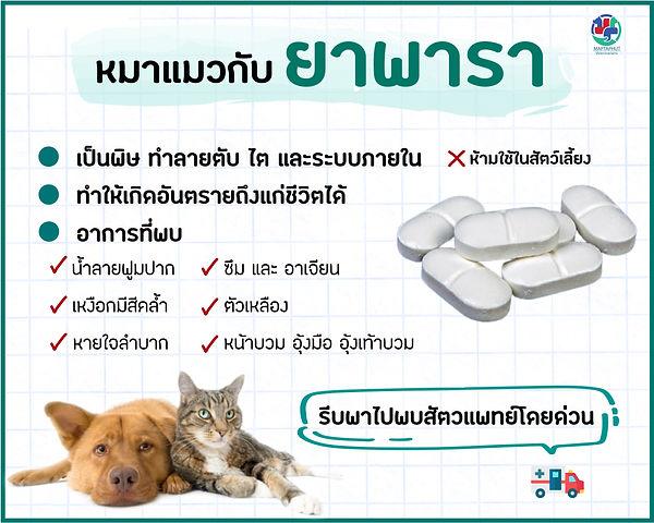 หมาแมวกับยาพารา.jpg