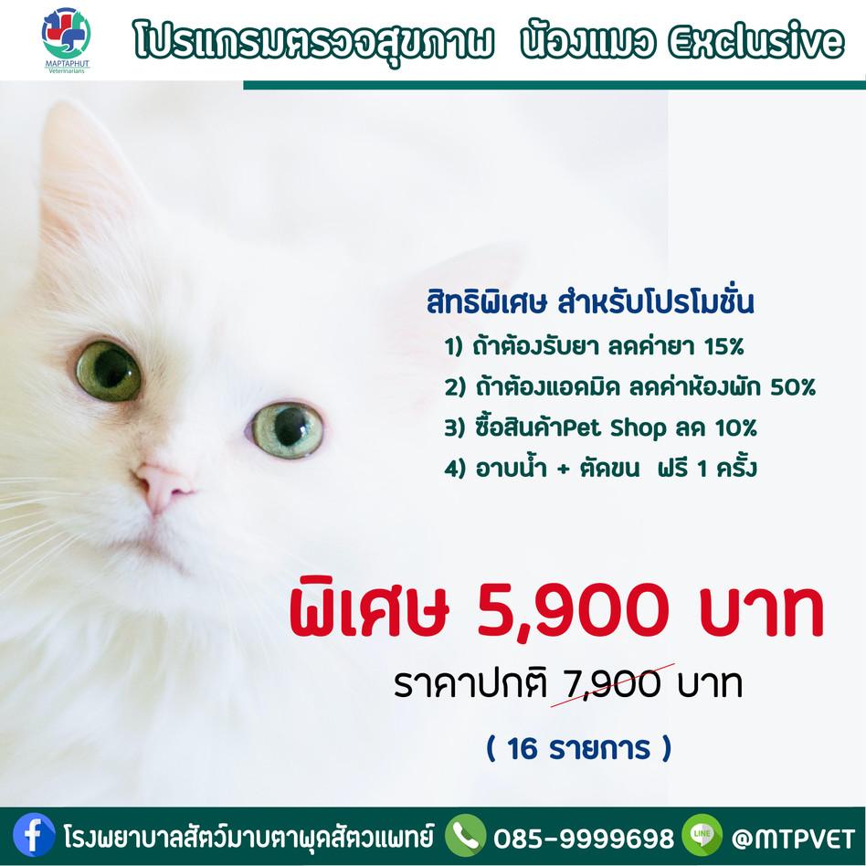 โปรแกรมตรวจสุขภาพ น้องแมว Exclusive โรงพยาบาลสัตว์มาบตาพุดสัตวแพทย์ เปิด 24 ชม.
