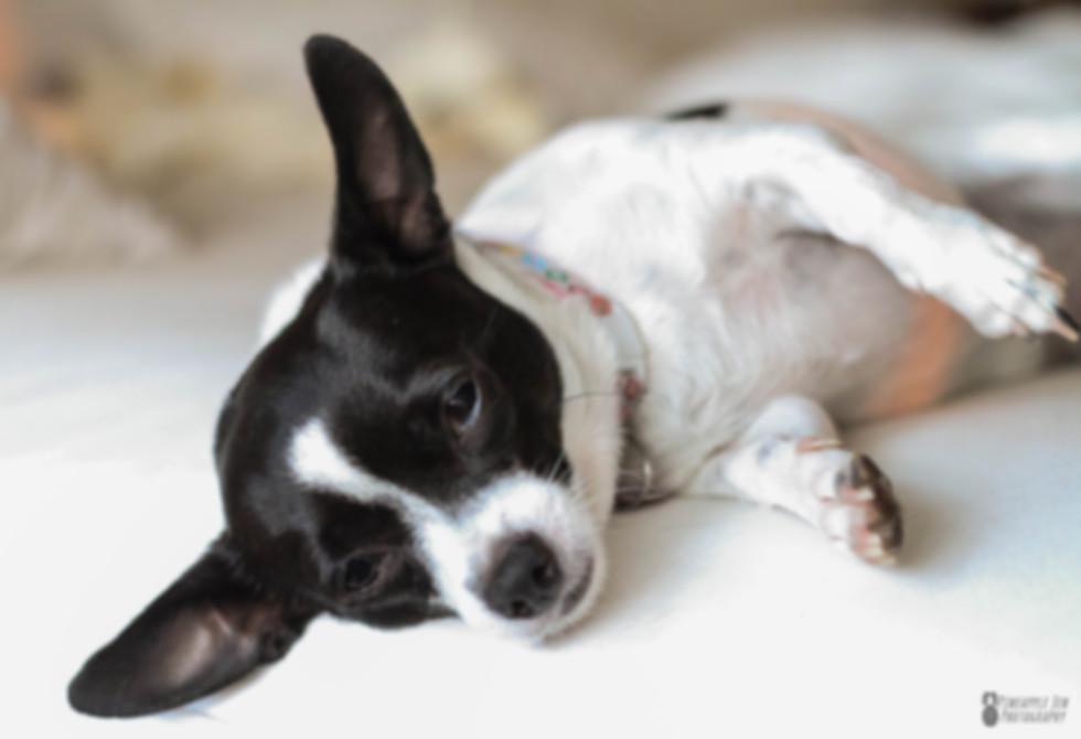 cute dog pet photography
