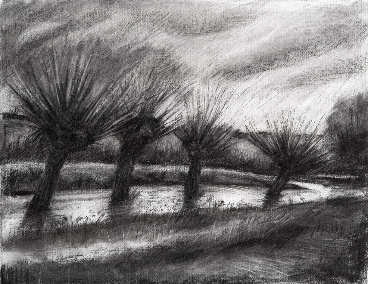 Pollarded willows, Winter