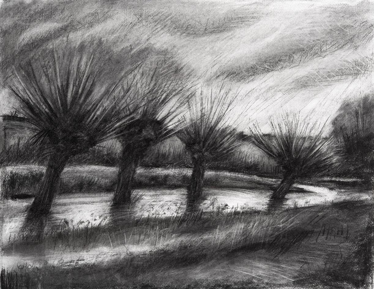 Pollarded willows, Winter
