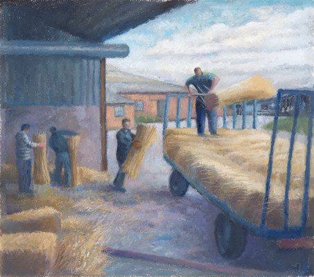 Loading the combed wheat wheat red for thatching