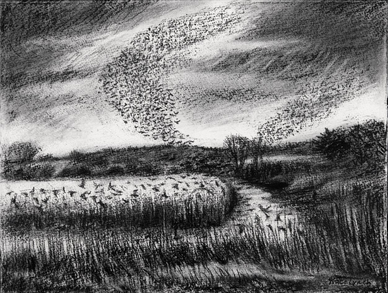 Starling murmuration, Westhay I