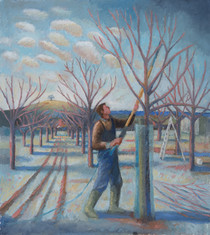 Zach pruning the apple tree, Burrow Hill