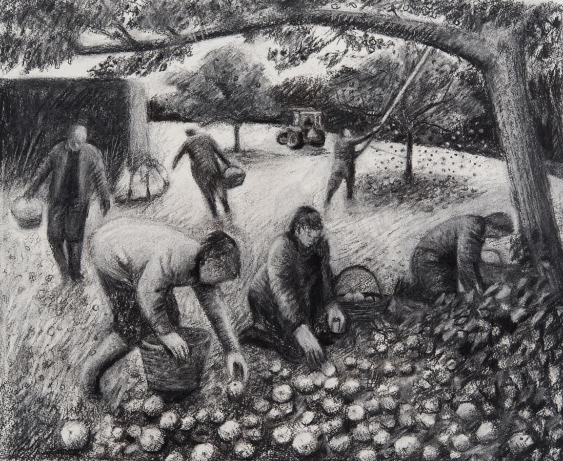 The Lockyer family picking cider apples