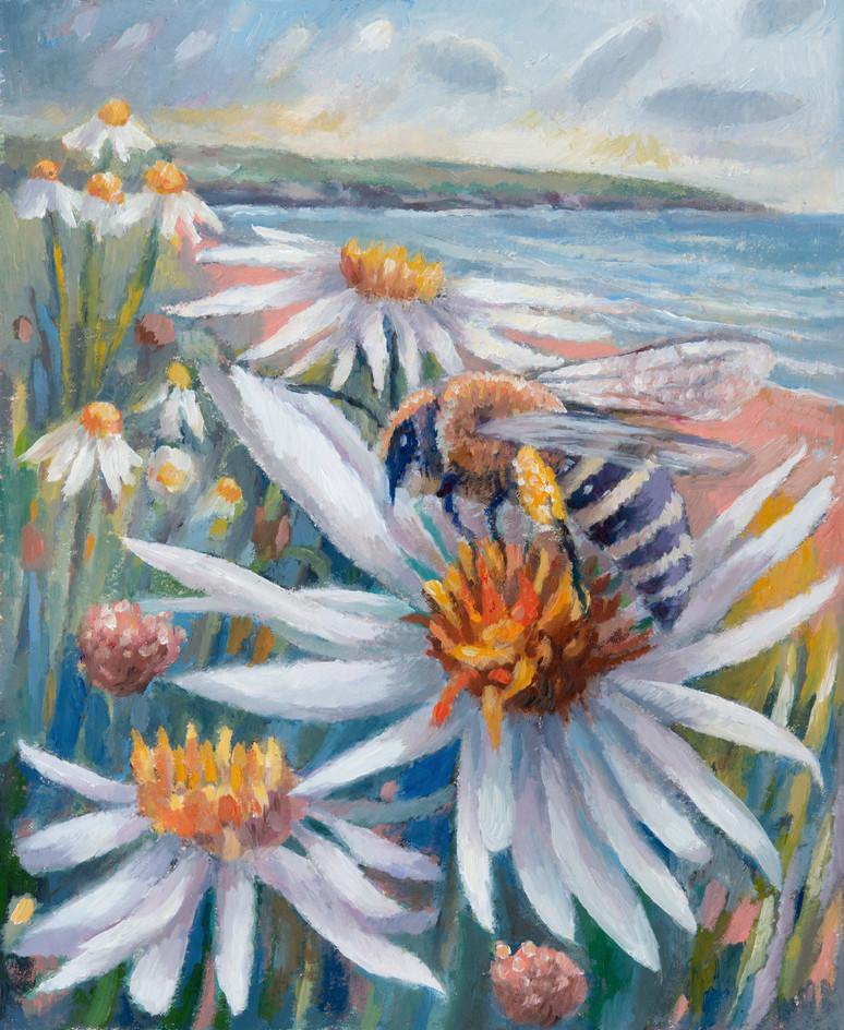 Sea aster mining bee