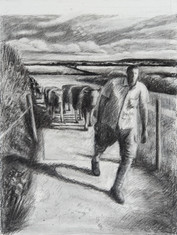 David brings in the cows, Overton Farm