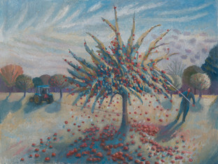 Shaking the cider apples off the tree