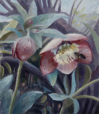 Honey bee on hellebore