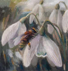 Honeybee on snowdrops
