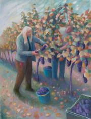 Grape harvest, Aller