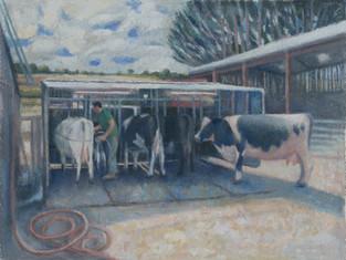 Luke and the milking bail, Southend Farm
