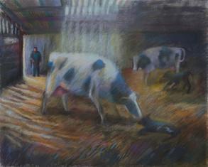 The new calf, North Cadbury