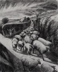 Running the sheep