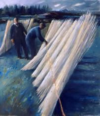 Drying white willow