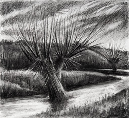The pollarded willow tree