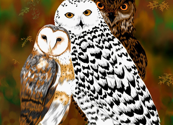 A Parliament of Owls: Part1
