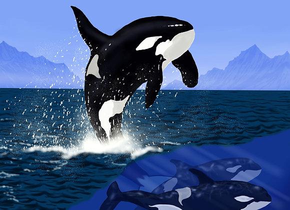 Playful Siblings II: The Orcas