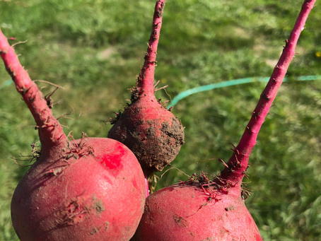 Elemental Magic of Growing Food (or, communing with the divine through food)