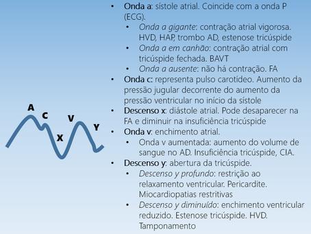 Características do pulso venoso jugular