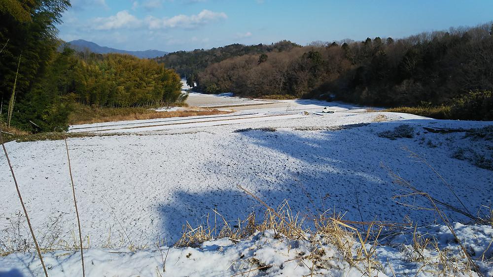 はしもと農園冬景色