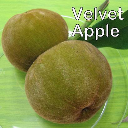 GMG Tropical Fruits, Inc.