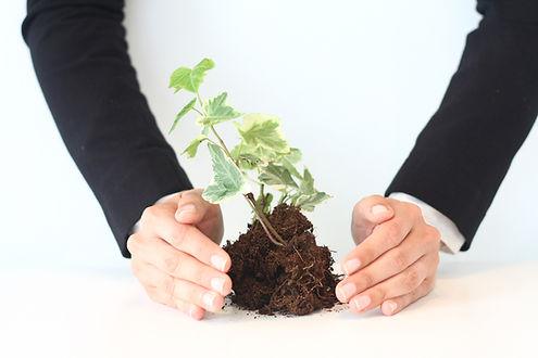 Гумат для растений