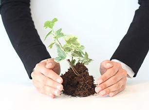 nutrir el crecimiento