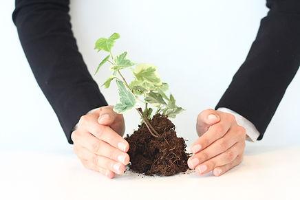 pflegende Wachstum