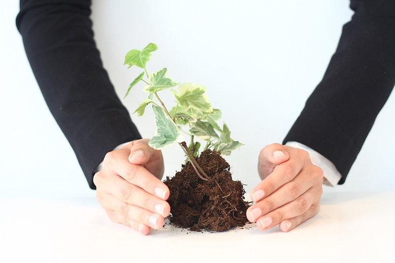 La croissance Nurturing